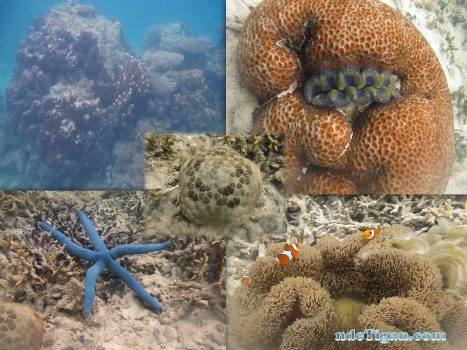 indahnya bawah laut Karimun