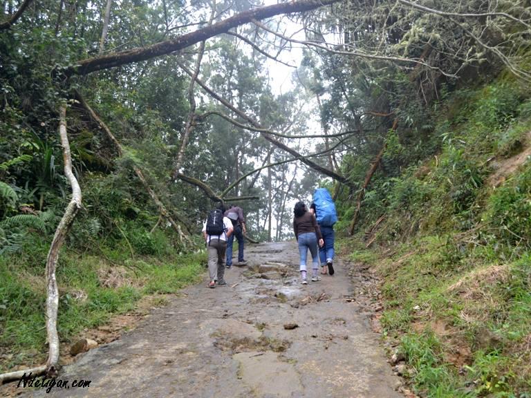 pohon tumbang dan tanah longsor akibat hujan deras